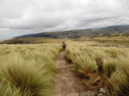 Windswept pathway