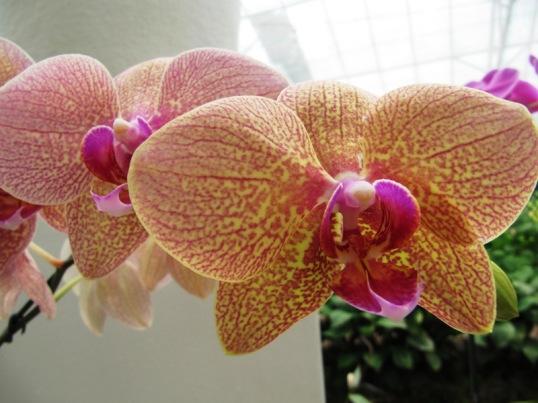 Orchid at the Jardim Botanico