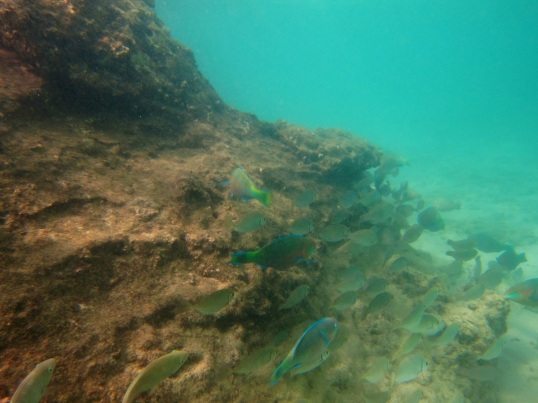 Phuket school of fish