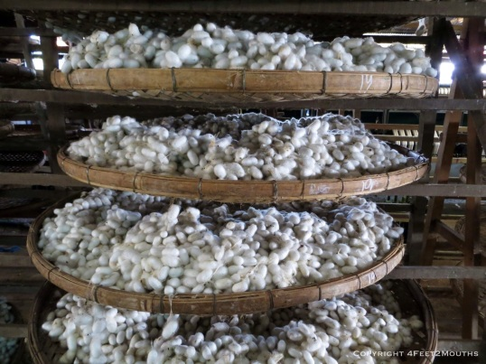 Trays of silk worm cocoons