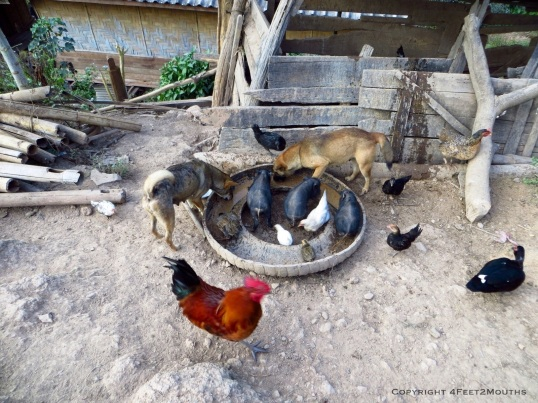 Animals sharing a feed bowl