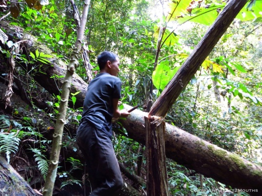 Our local guide cutting down banana tree