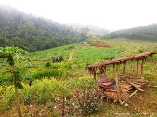 Nam Khone farmland