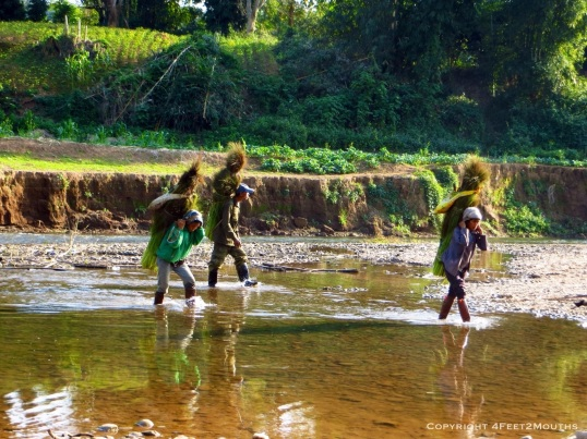 Three farmers carry their daily harvest across the river