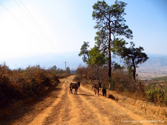 Friendly family of donkeys