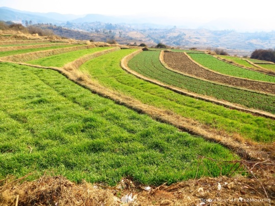 Terraced farmland east of Shaxi