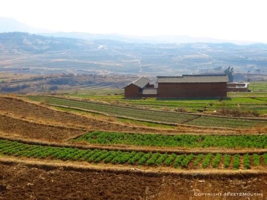 Farmland near Shaxi