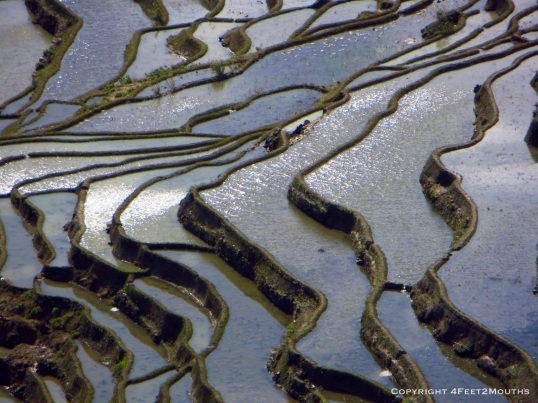 Close-up of Duoyishu rice terraces