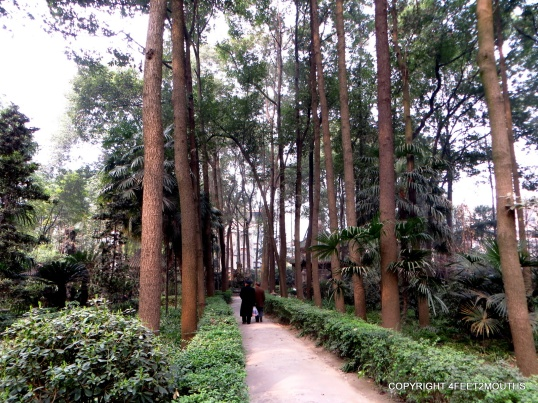 Grove of trees on Wenshu Temple Grounds