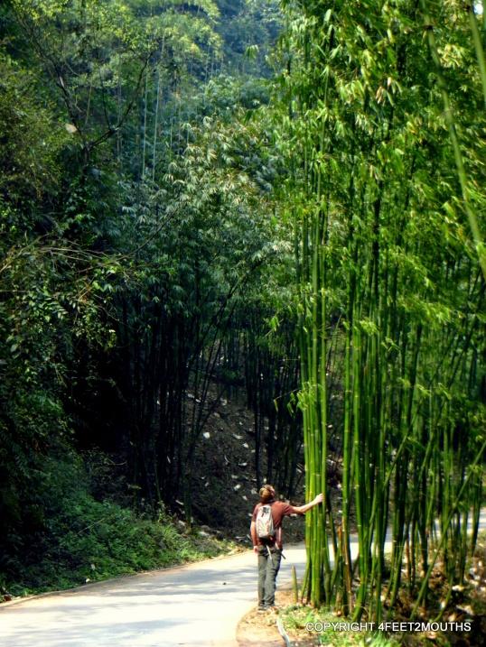 Nathan wondering how to climb bamboo