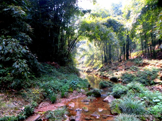 Picturesque bamboo stream