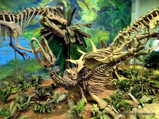 Two dinosaur skeletons fighting each other