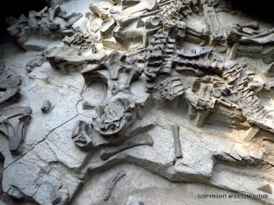Bones encased in the mud