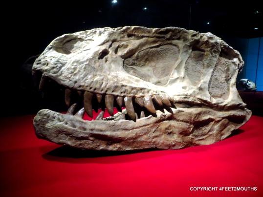 Amazing in-tact szechuanosaurus skull