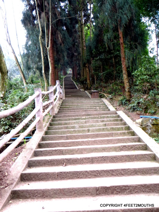 Stairway in the forest