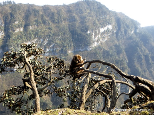 Monkey on the cliff