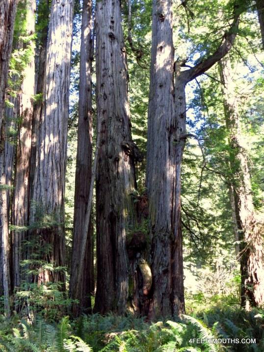 Nudist tree? Open for interpretation.