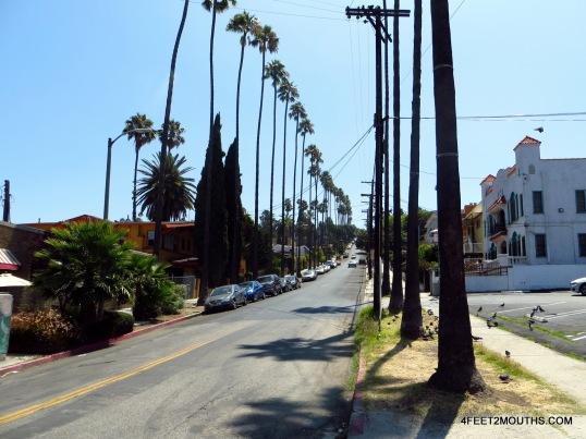 Typical LA street - palm trees, low-rise buildings, baking sun, nobody walking.