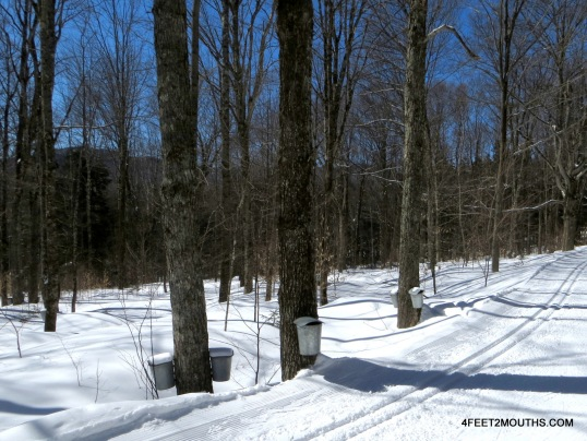 Cross Country skiing at the Von Trapp Family Lodge - note the metal maple buckets
