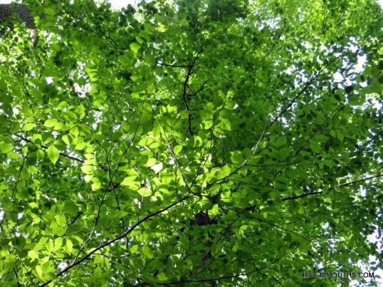 Vivid green landscape