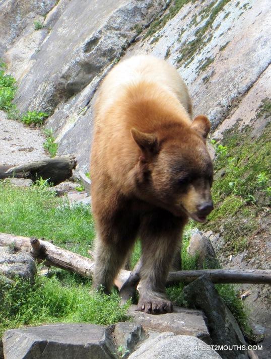 Bears are necessary at the Bear Mountain Zoo