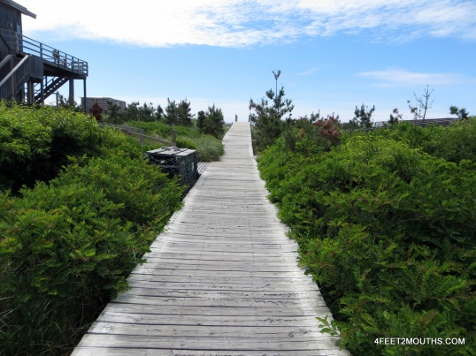 "Wooden walkways become the ""roads"" of the car-free sections of Fire Island"