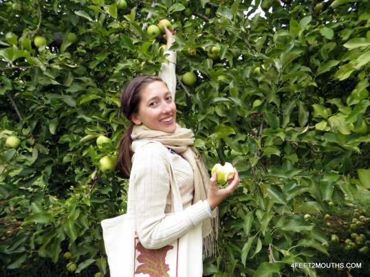 Trees laden with apples made for easy picking