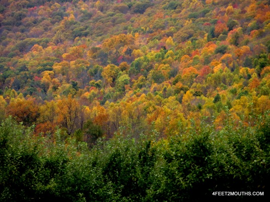 Fall foliage in the Hudson Valley
