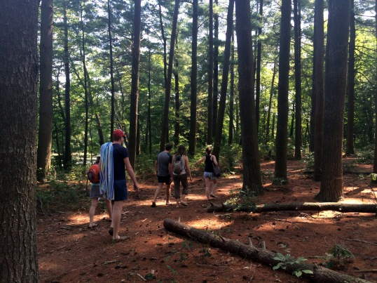 Woodsy stroll (photo source: Megan)