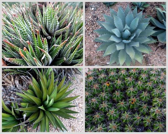Cacti at the Jardín Etnobotánico
